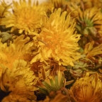 Capturing Spring in a Jar: Preserving Dandelions